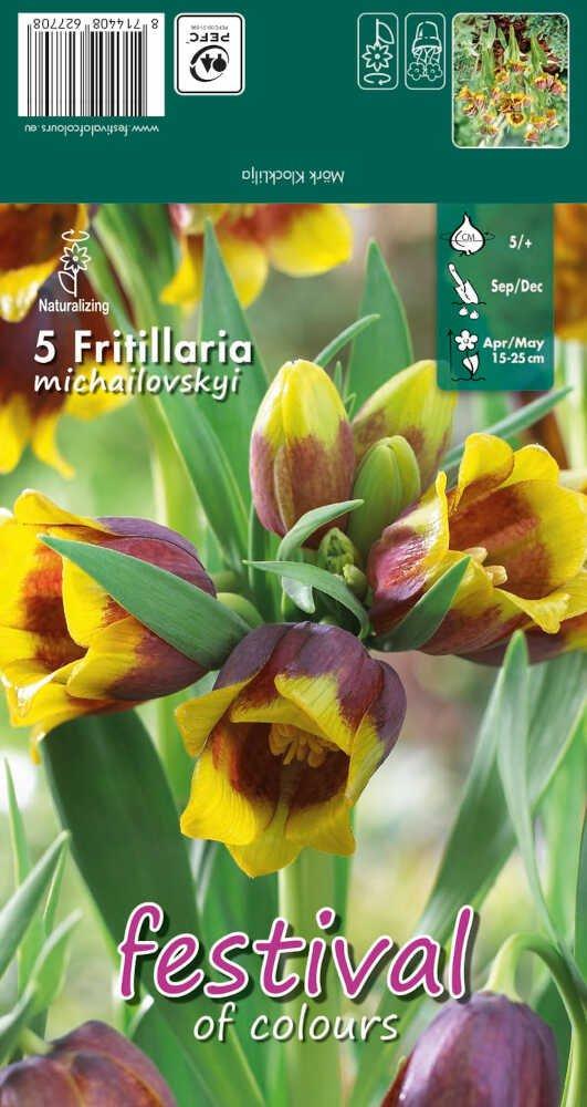Fritillaria Michailovskyi 5/+
