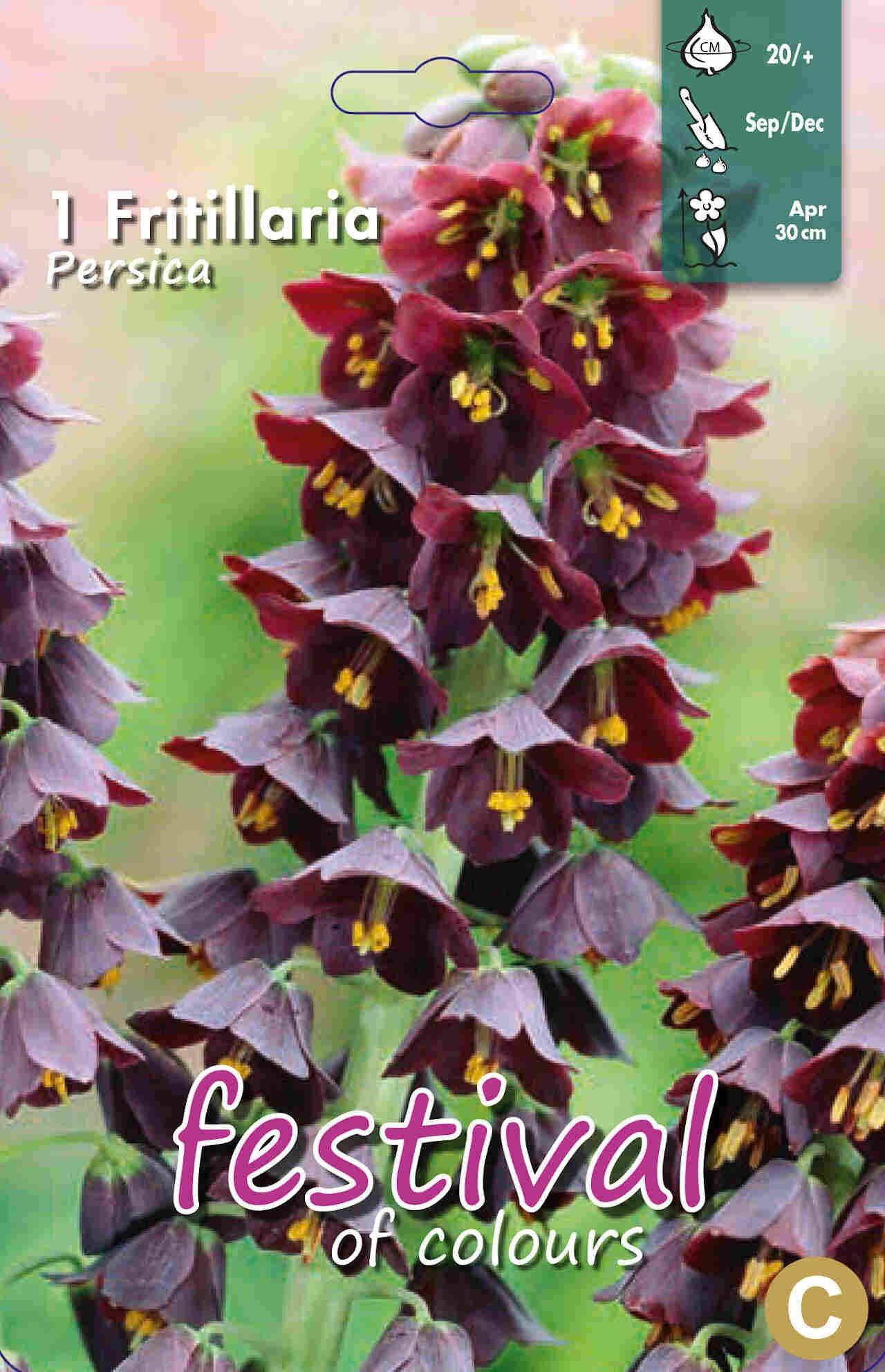 Persisk Vibeæg - Fritillaria Persica 20/+
