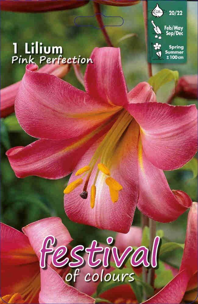 Lilje - Lilium Pink Perfection Hybrids Aurelian (x1) 20/22