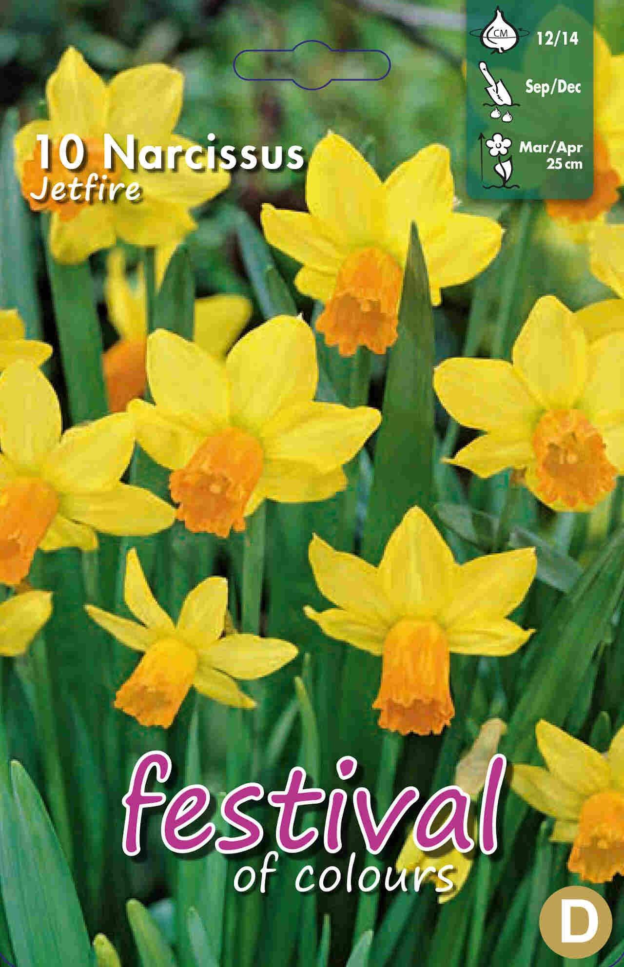 Påskeliljeløg - Narcissus Jetfire 12/14