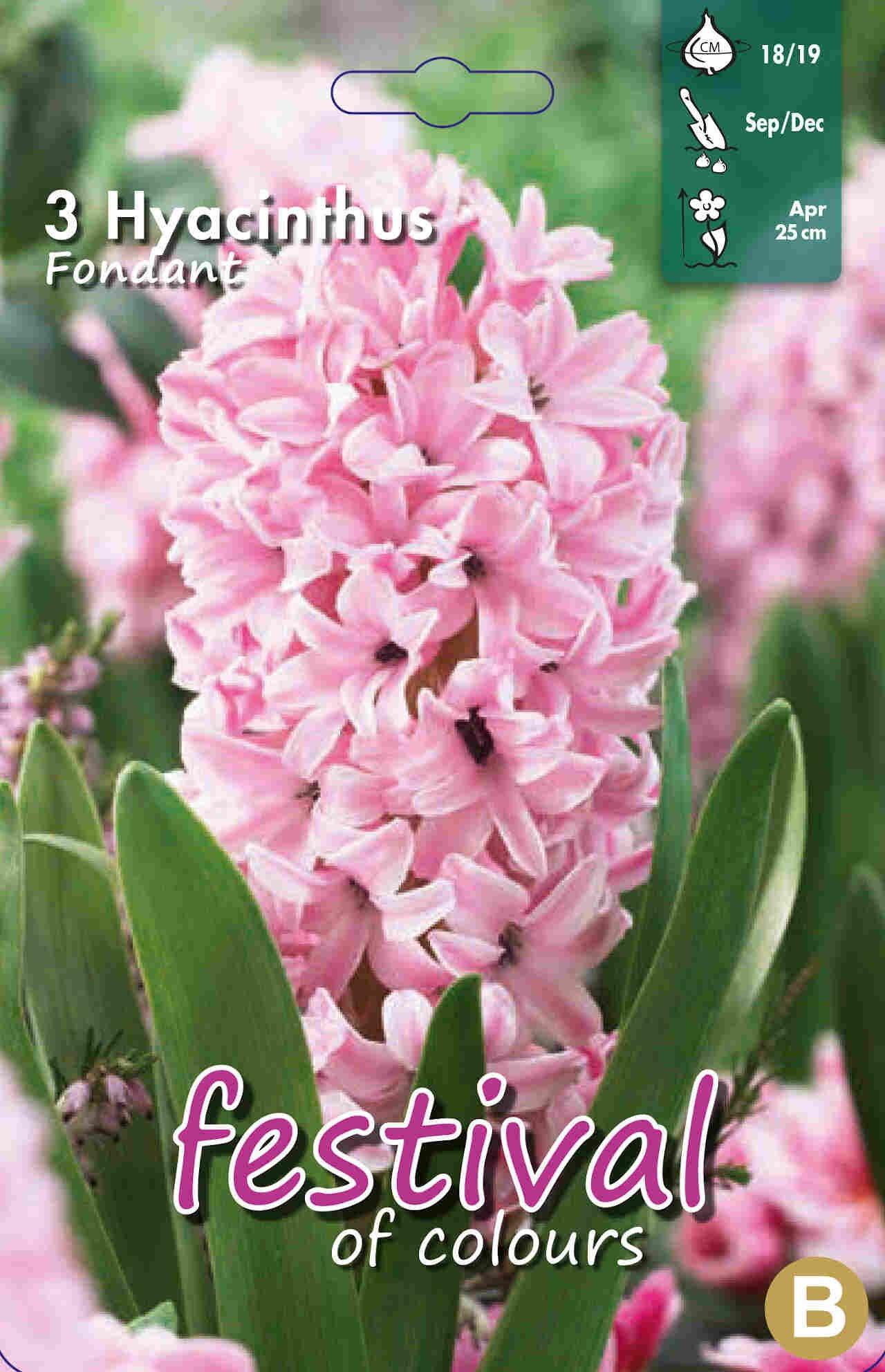 Hyacinths Fondant 18/19