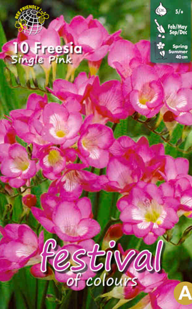 Fresia - Freesia 'Pink Single' 5/+