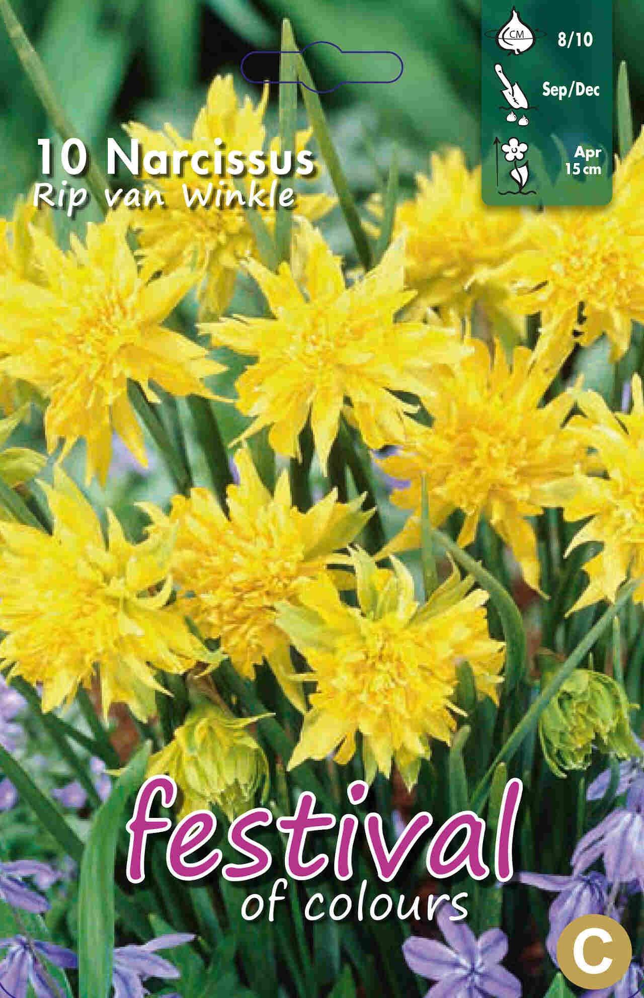 Narcisses Rip van Winkle 8/10