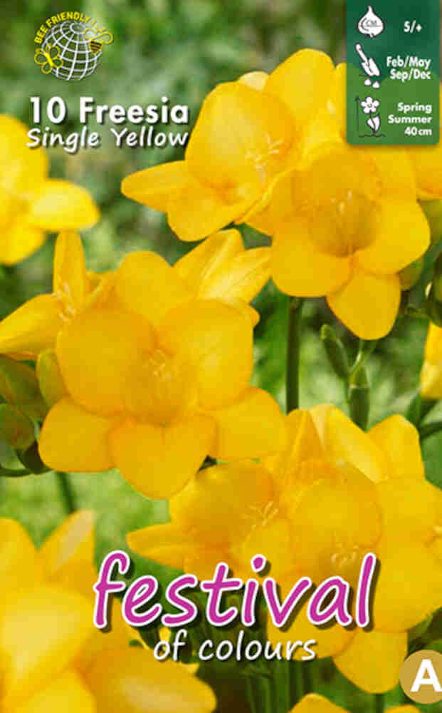 Fresia - Freesia 'Yellow Single' 5/+