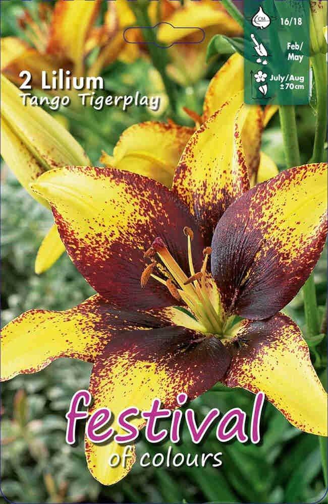 Lilje - Lilium Tango Tigerplay Asian (x2) 16/18