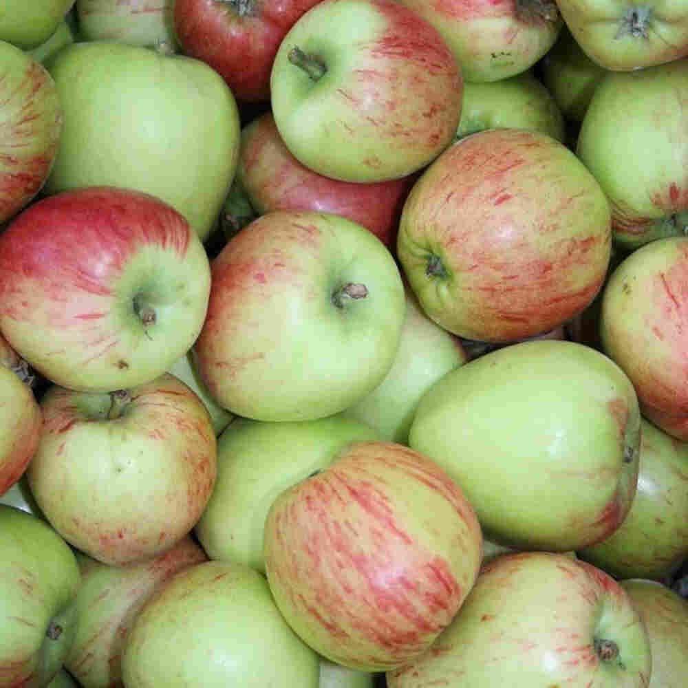 Æbletræ - Malus domestica 'Guldborg'