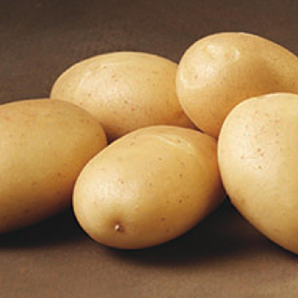 Læggekartofler - Sava Økologisk