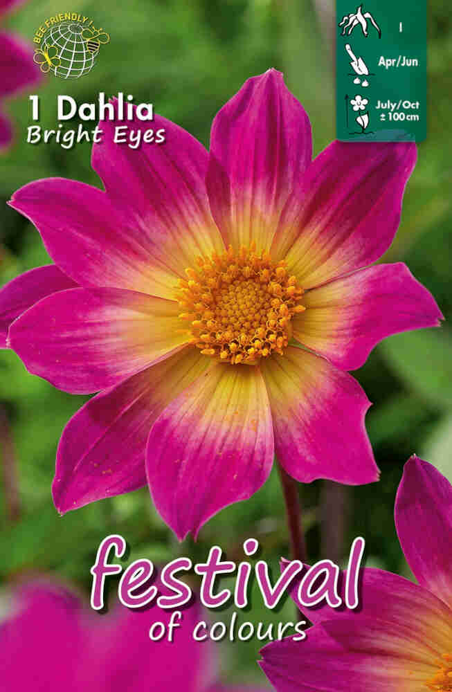 Dahlia 'Bright Eyes' Single flowering, NYHED