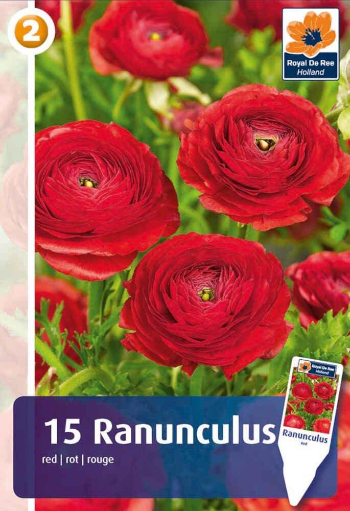 Ranunkel - Ranunculus Red 5/6