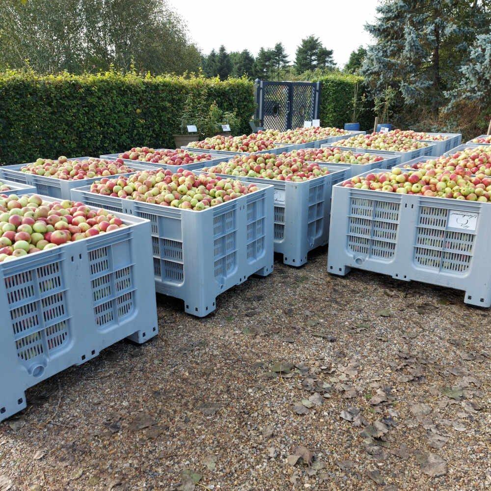 Vesterhavsmost æbler klar til mosteri