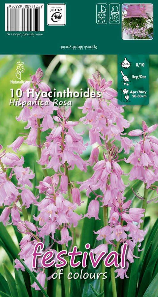 Spansk klokkeskilla - Hyacinthoides hispanica Rosa 8/10