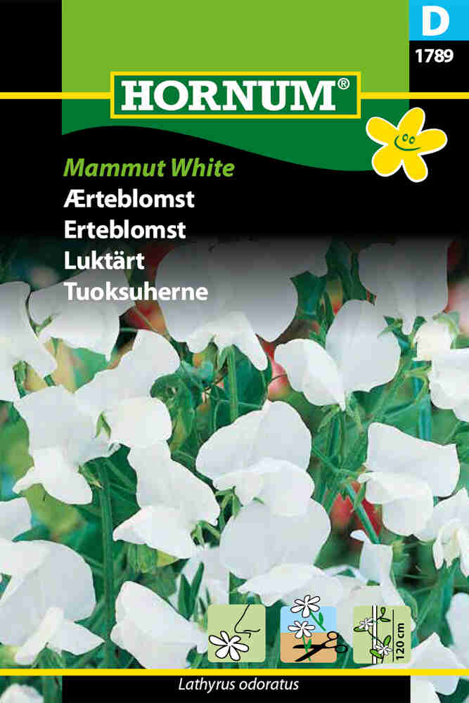 Ærteblomstfrø - Mammut White