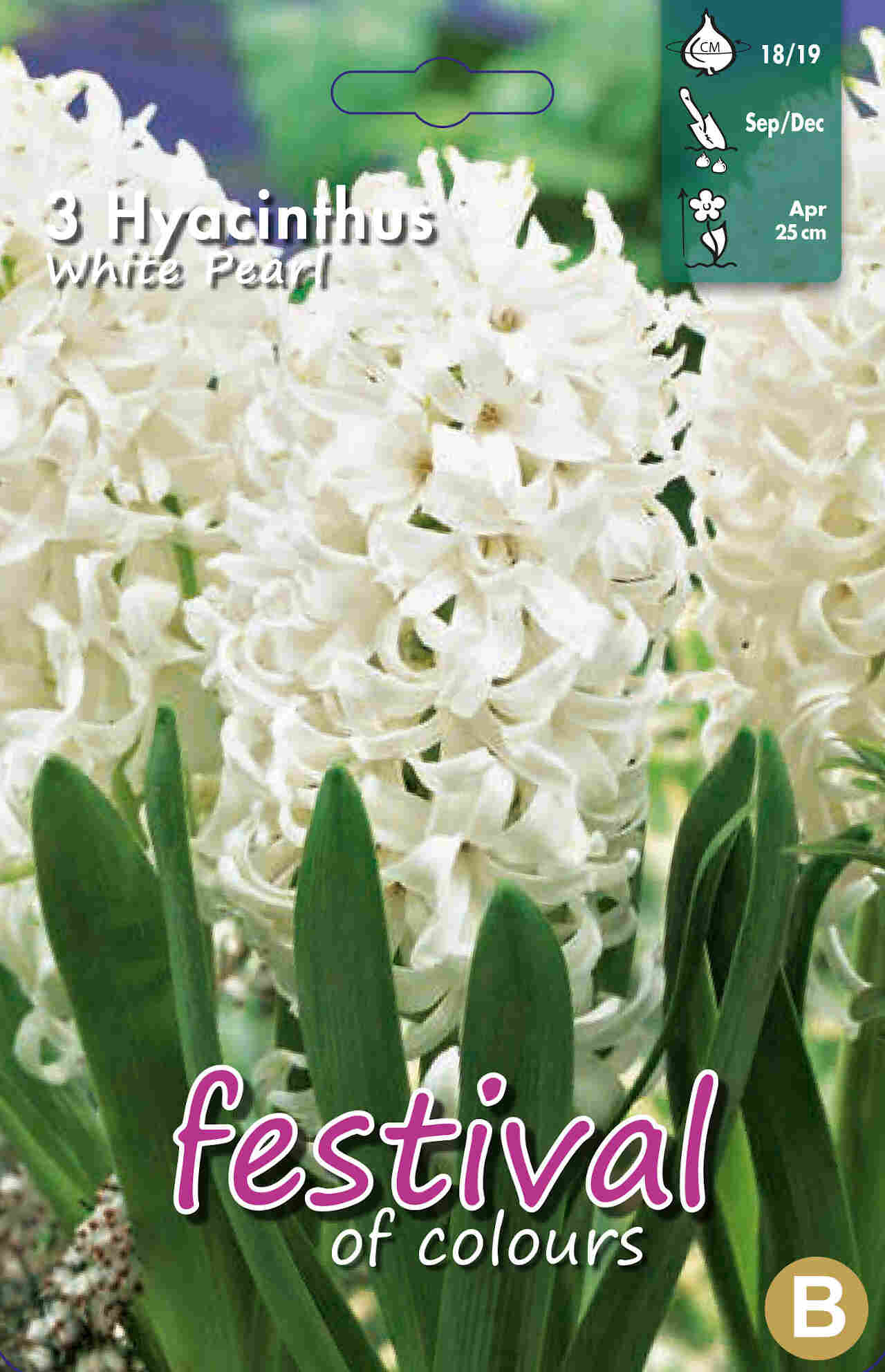 Hyacint - Hyacinthus White Pearl 18/19