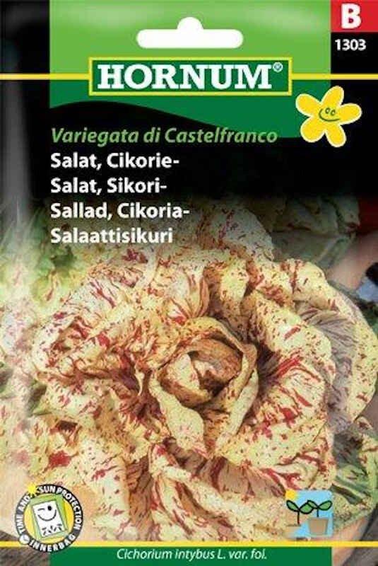 Salatfrø - Cikorie - Variegata di Cast.