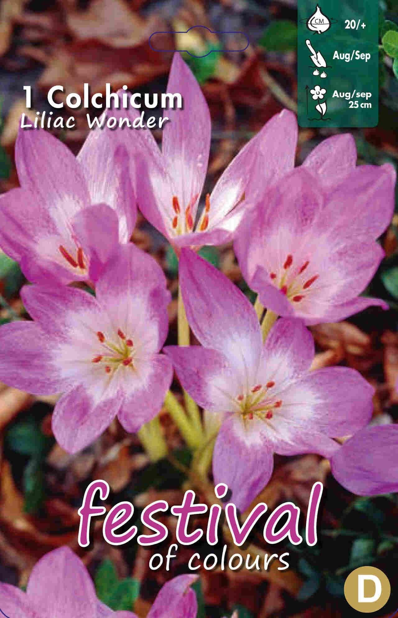 Tidløs - Colchicum Lilac Wonder 20/+