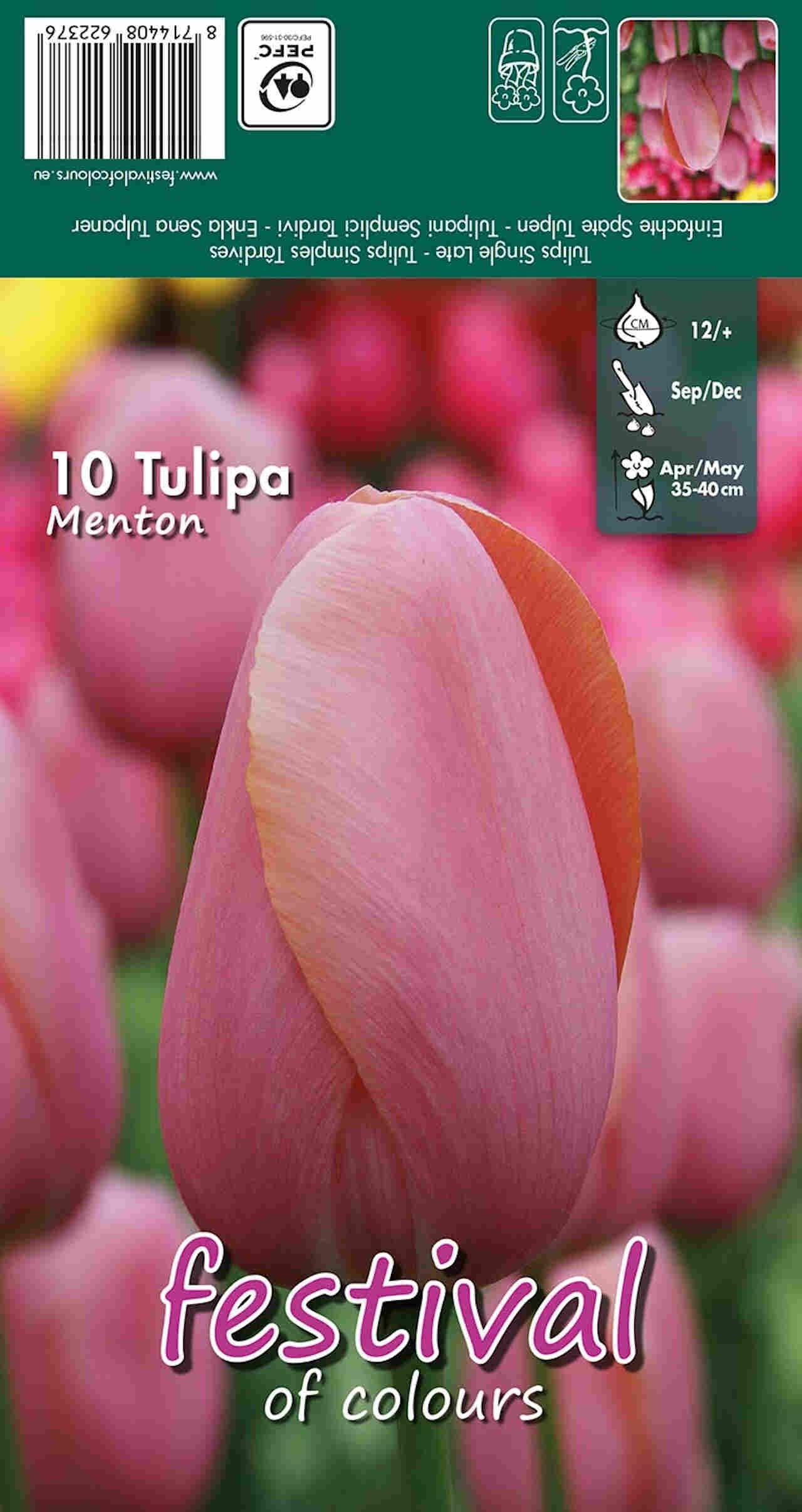 Tulipanløg - Tulipa Menton 12/+