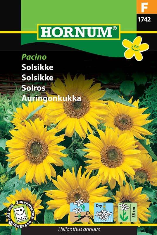 Solsikkefrø - Pacino