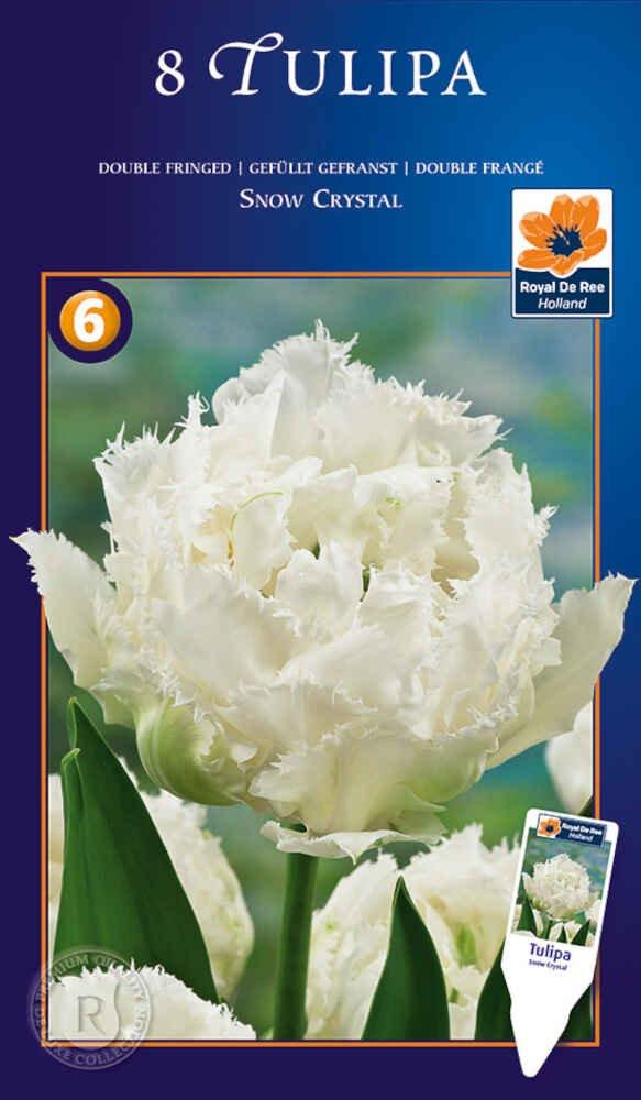 Tulipanløg - Tulipa Snow Crystal 11/+