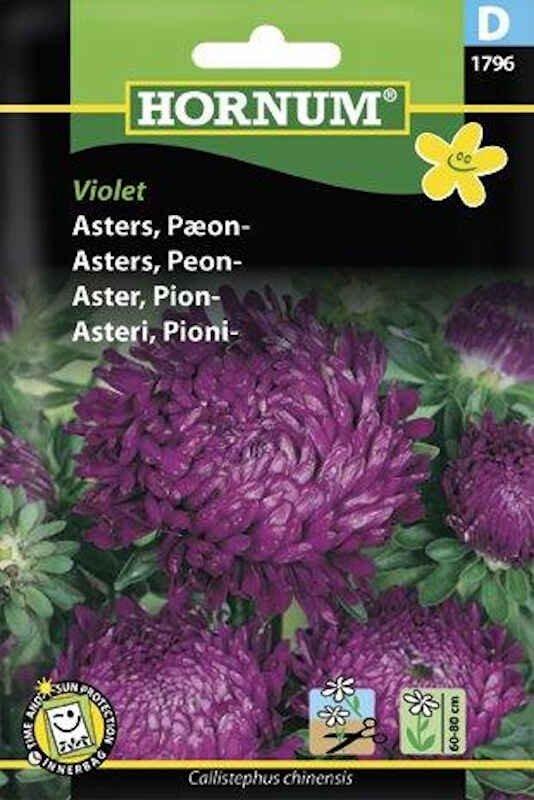 Asters frø - Pæon - Violet