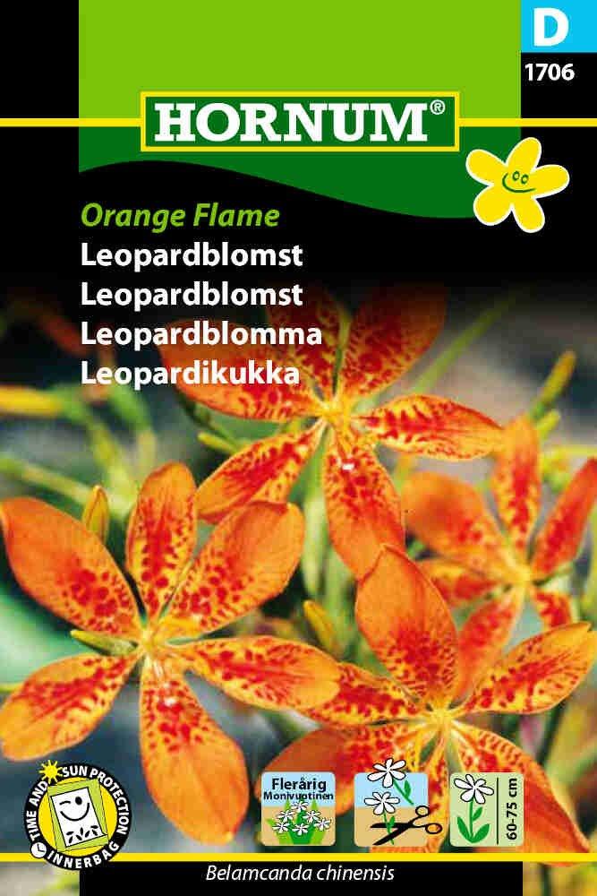 Leopardblomst - Orange Flame