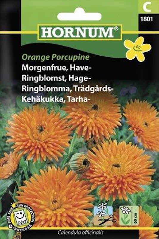 Morgenfrue frø - Have - Orange Porcupine