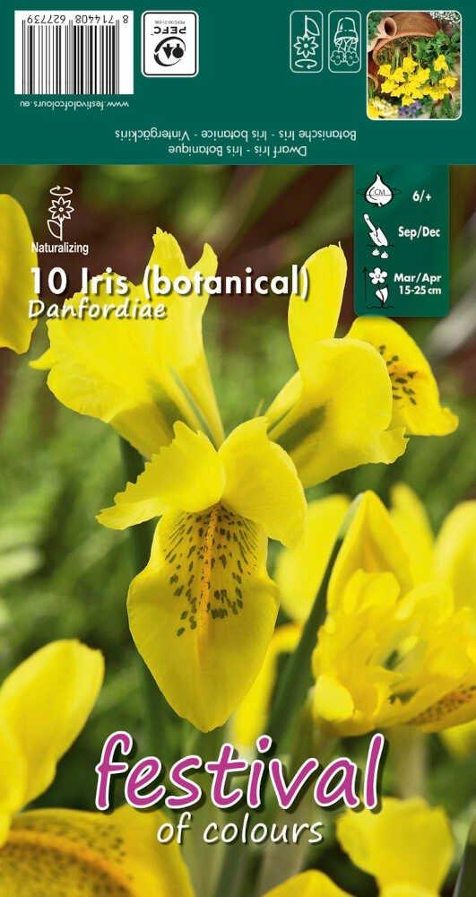 Iris Danfordiae, 5/+