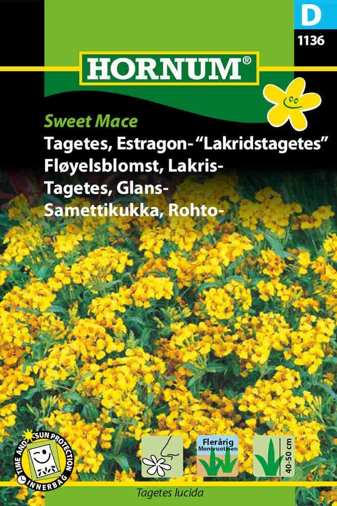 Tagetes frø - Estragon - Lakridstagetes