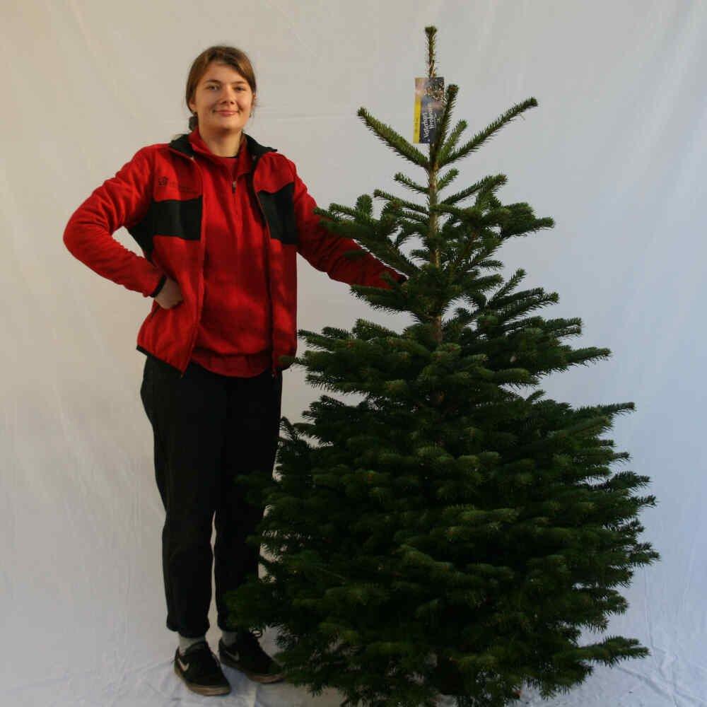 Juletræ - Nordmannsgran - 175-200cm