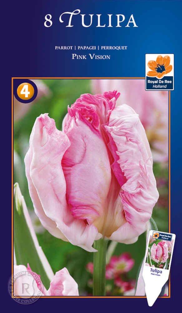 Tulipanløg - Tulipa Pink Vision 12/+