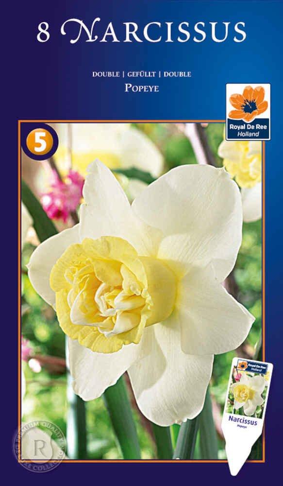 Påskeliljeløg - Narcissus Popeye 12/14