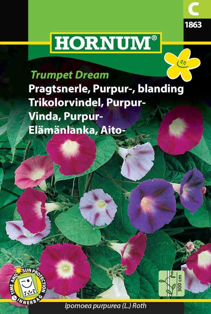 Pragtsnerle frø - Purpur blanding Trumpet D.