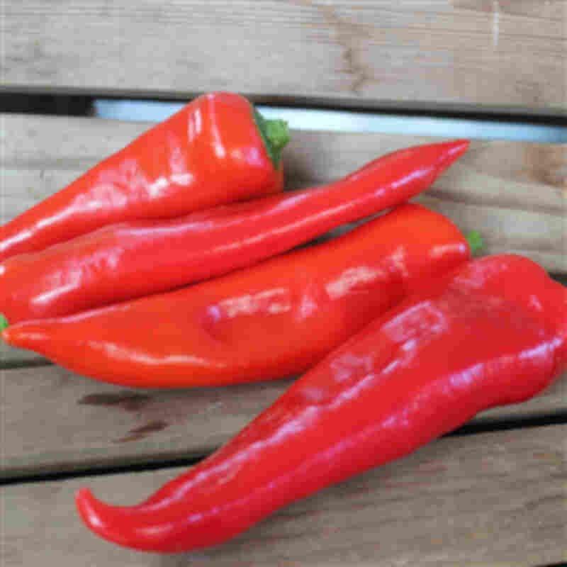 Peberplante - Snackpeber 'Robiero'