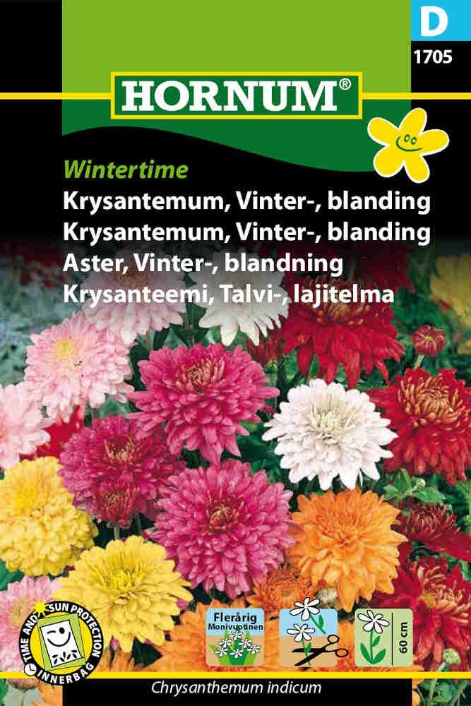 Krysantemum - Vinter- - bl. - Wintert.
