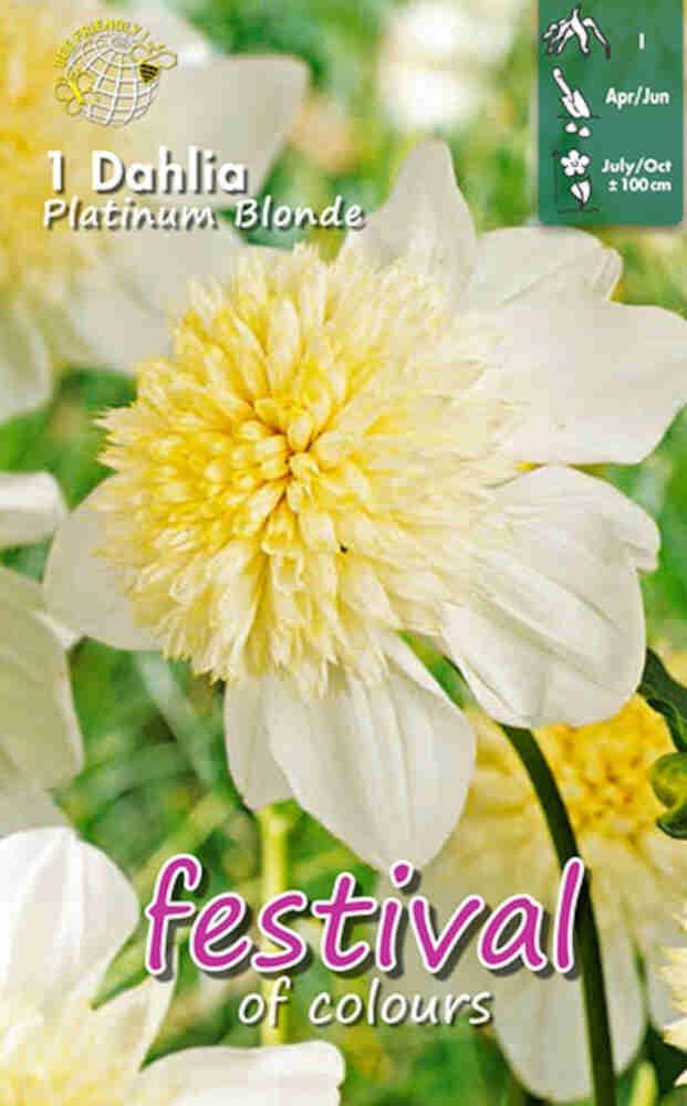 Dahlia Platinum Blonde