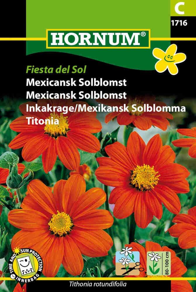 Mexicansk Solblomst - Fiesta del Sol