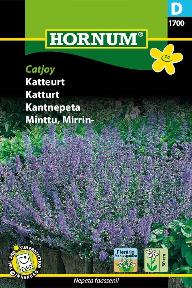 Katteurt - Catjoy