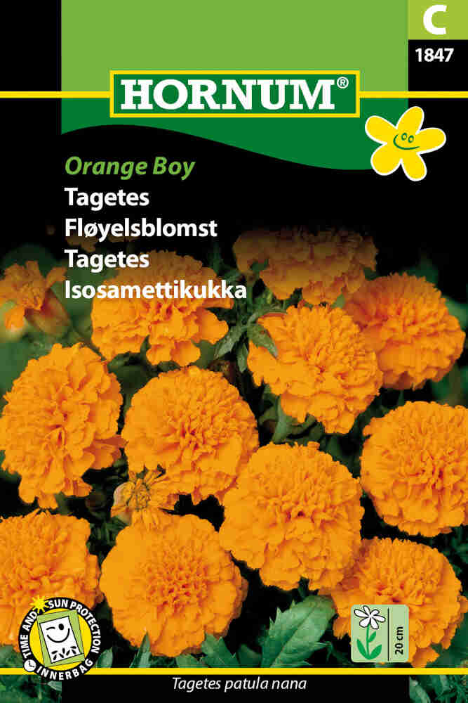 Tagetes frø - Orange Boy