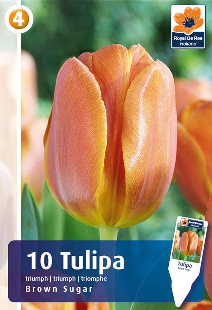 Tulipanløg - Tulipa Brown Sugar 11/12