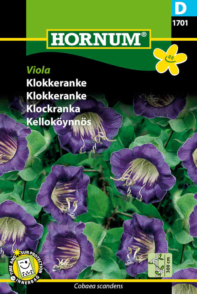Klokkeranke - Viola