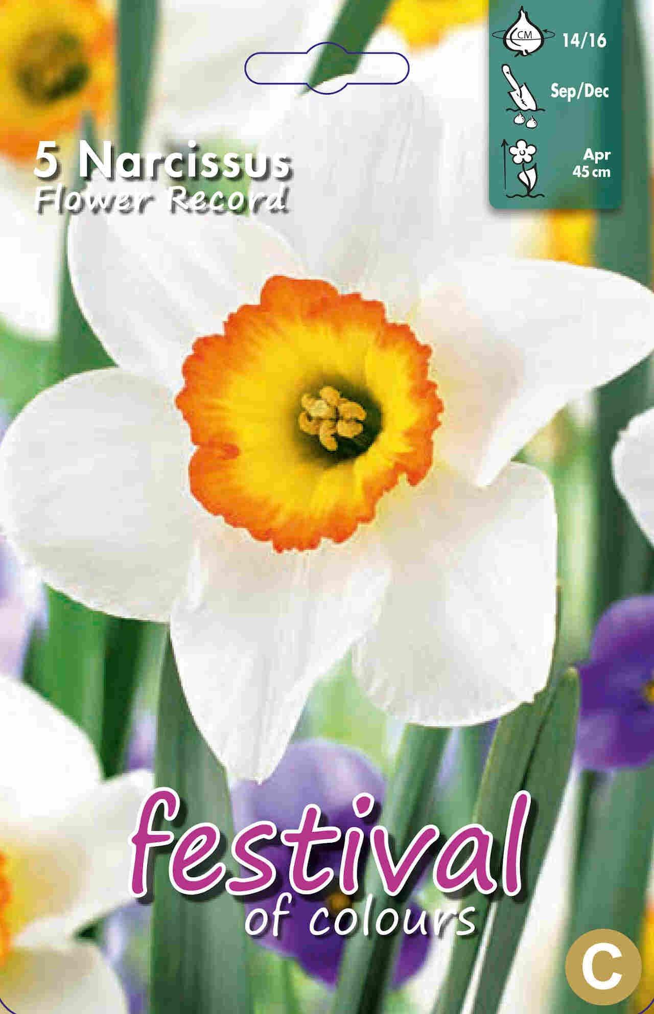 Påskeliljeløg - Narcissus Flower Record 14/16