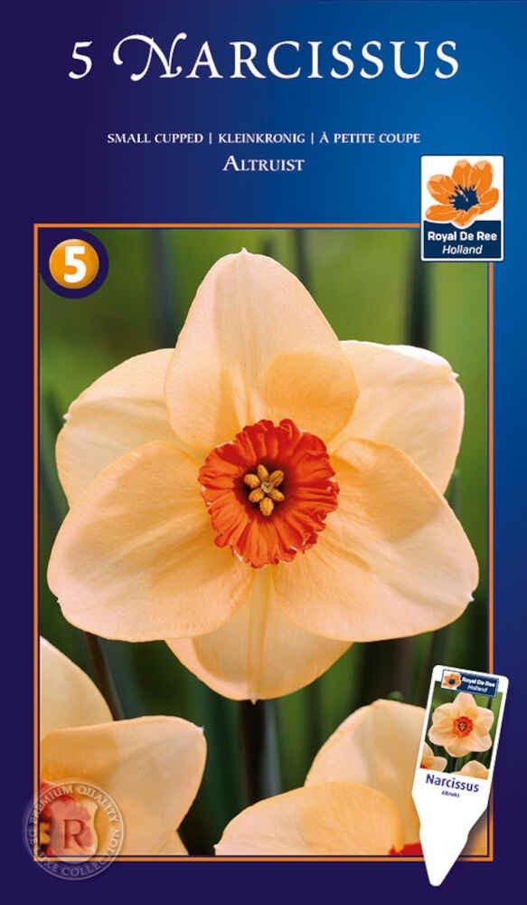 Påskelilje - Narcissus Altruist 14/16