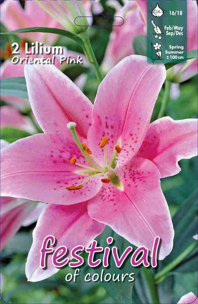 Lilje - Lilium Oriental Pink (x2) 16/18