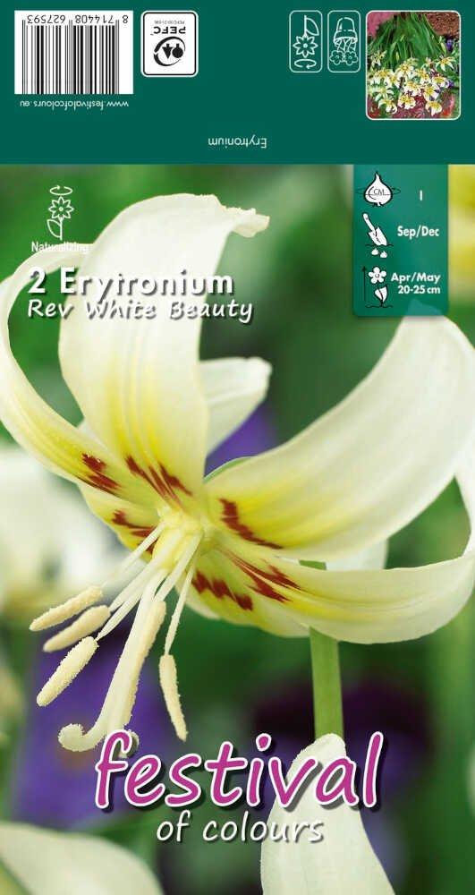 Erytronium Rev White Beauty I
