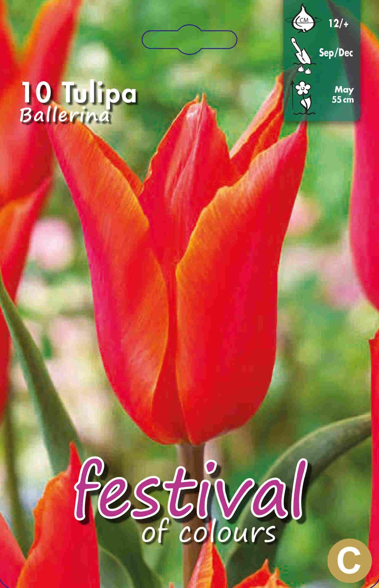 Tulipanløg - Tulipa Ballerina 12/+
