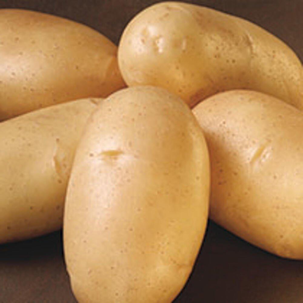 Læggekartofler - Fakse