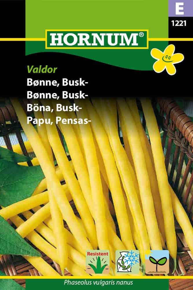 Buskbønnefrø - Phaseolus vulgaris nanus 'Dior'