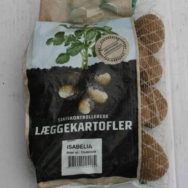 Isabella er en høj kvalitets læggekartoffel