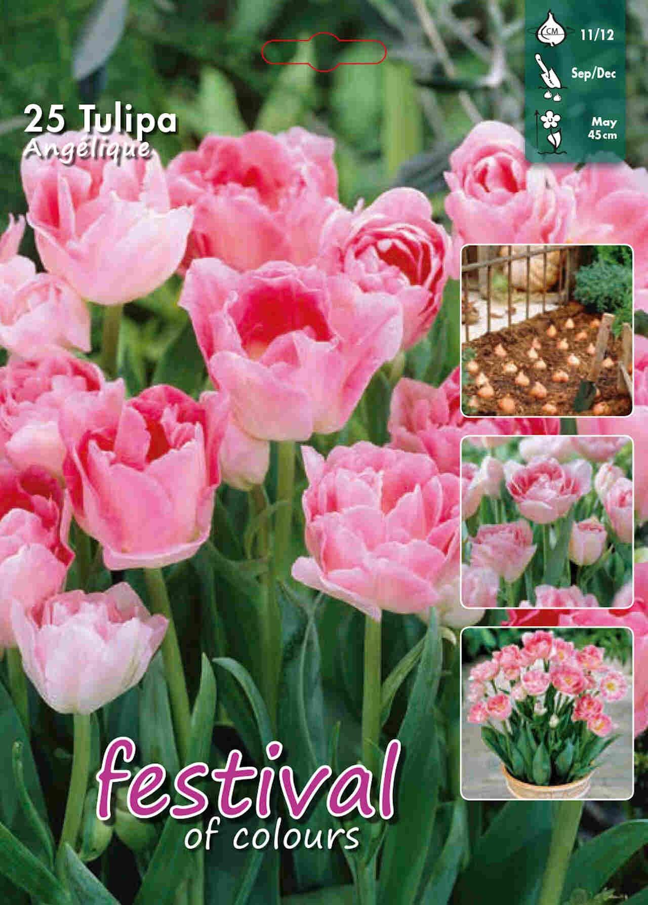 Tulipanløg - Tulipa Angelique 12/+ Big bag