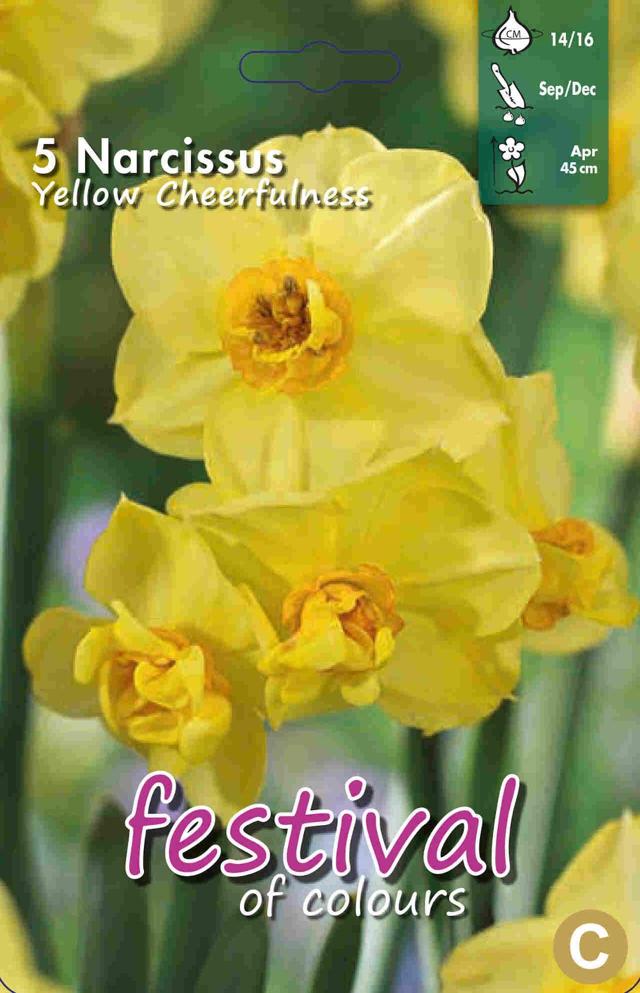 Påskelilje løg - Narcissus Yellow Cheerfulness 14/16