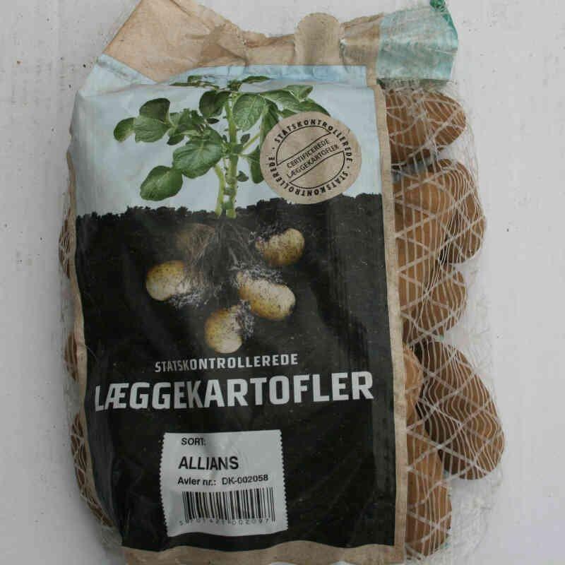 Allians læggekartofler er faste og gourmet agtige